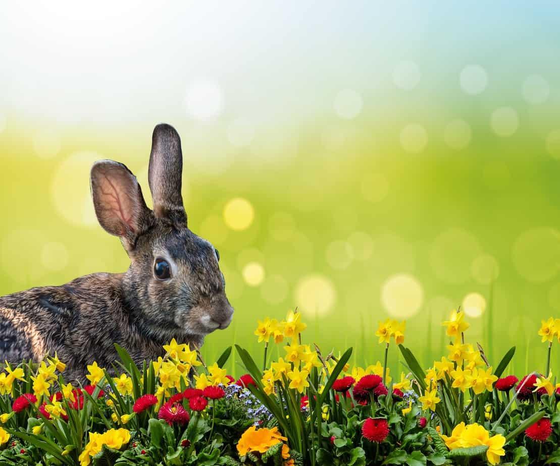 Hase, Ostern, Feiertag